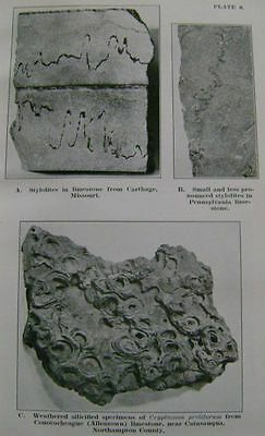 Pennsylvania Geology: Limestone, Scientific Reference; Fossils, Mineralogy