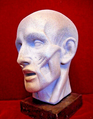 """Head bust by Houdon """"Ecorche"""".  White metal 14,2 inch"""
