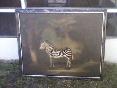 George STUBBS ZEBRA ART MUSEUM QUALITY REPRO PORTRAIT REGISTER N 5084 C FRAMED!