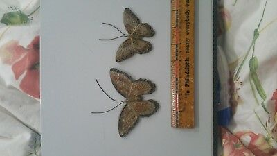 Vintage 2 pc  Brass Butterfly Wall Hanging Home Decor as found