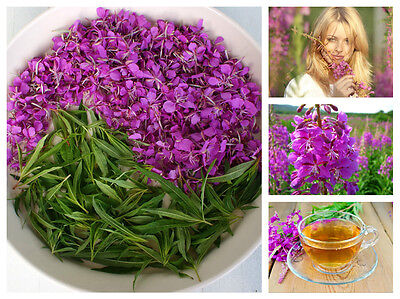 Ivan Chai Иван-чай Willow-herb 50 g. Collected in the wild Altai. 100% Natural.
