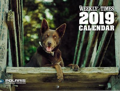 The Weekly Times 2019 A4 Calendar Dogs Kelpies Border Collies Dachshund Dog