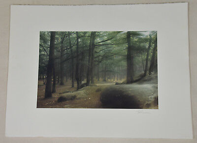 Summer Forest at Fontainbleau Vintage Signed Robert Farber Limited Edition Photo