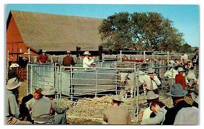 1950s Western American Cattle Auction Postcard