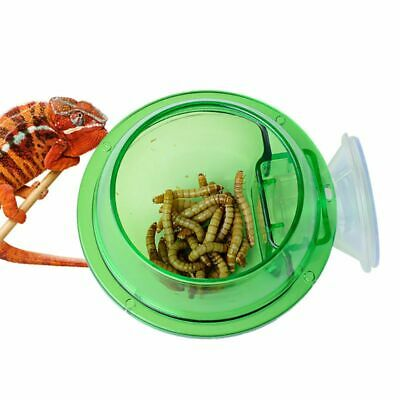 Anti-escape Reptile Food Bowl Cup Turtle Lizard Worm Live Food Container Feeder
