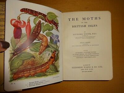 Moths Of British Isles  Sphingidae Noctuidae Illus By South Lepidopterology 1920