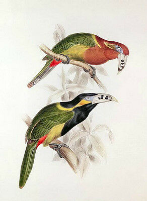 Art Oil painting two big mouth birds toucan on branch - handpainted on canvas