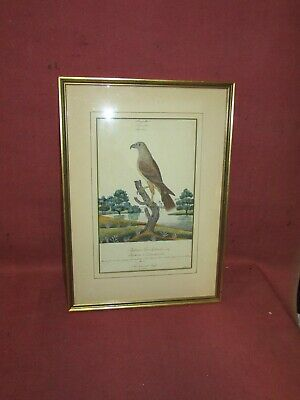 Antique New Zealand Eagle Ornithological Painting Watercolor Circa 1760