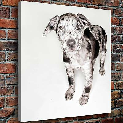 """Animals Dog HD Canvas prints Painting Home decor Picture Room Wall art 16""""x18"""""""