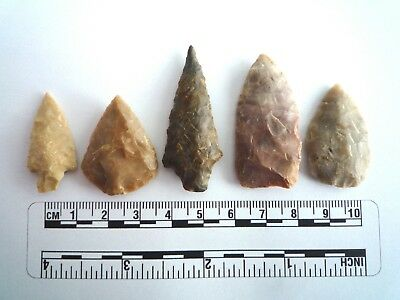 5 x Native American Arrowheads found in Texas, dating from approx 1000BC  (2237)
