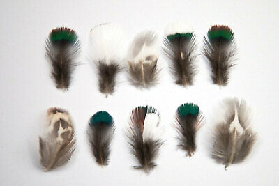 Very Small Mixed Natural Pheasant Neck Feathers 1-3cm - Ethically Sourced