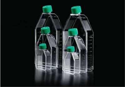 SPL Tissue Culture Flask with Filter Cap, Tissue Culture Treated, Sterile, 25 cm
