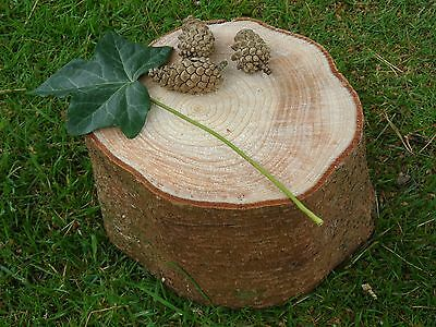 "Spruce Bark Wood Log Slice Decorative Display Logs 6"" diam x 6"" thick + 3 cones"