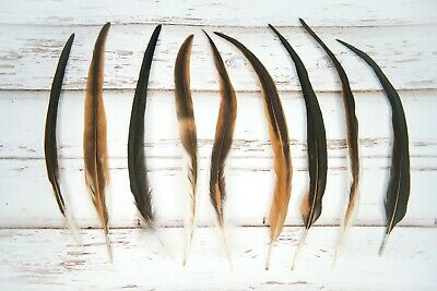 """Large Natural Brown Rooster Feathers 11-14"""" - Great for wedding favours, crafts"""