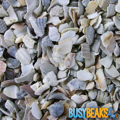 BusyBeaks Hen Sized Oyster Shell - Premium Grade High In Calcium Poultry Grit