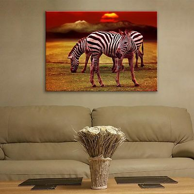 Wall Art Glass Print Picture Painting Unique Africa Zebras Gift Decor cm/100x70