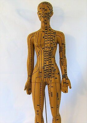"""19"""" human acupuncture model female anatomical sculpture figurine brown New"""