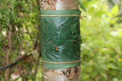 Tree Glue Band Insect Ant Trap Killer Fruit Pest Barrier Prevent Stop Protect