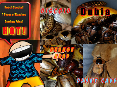 Roach Special!!  4 Types Of Meaty Roaches For One Low Price!!