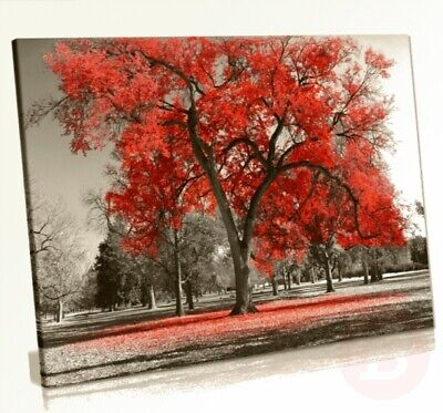 Large Tree Red Leaves Black White Nature Canvas Wall Art Picture Print ...