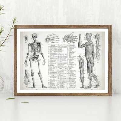 Human Anatomy Muscular And Skeletal Systems Poster Canvas Prints Wall Art Decor