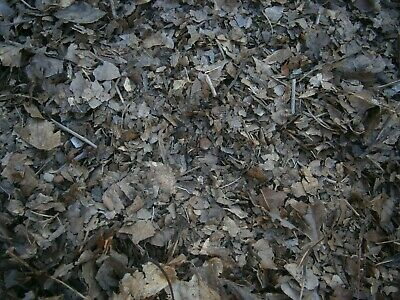 Dried Crushed Leaf Litter  1 Litre 3 Litre 5 Litre Bioactive Isopods Reptiles