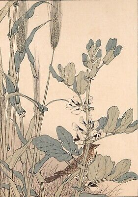 Antique, Imao Keinen Woodblock Print, Seitei Audubon admirers and Ukiyoe RARE