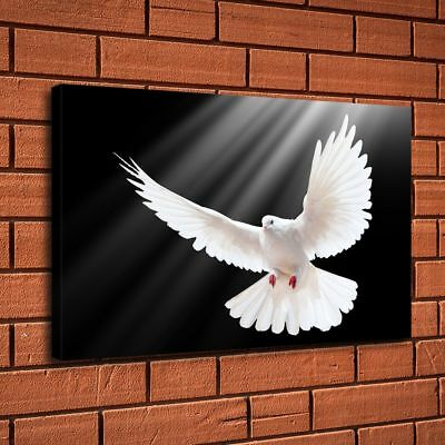 "White Dove of Peace HD Canvas print Painting Home Decor Picture Wall art 16""x26"""