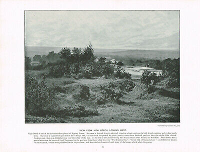 High Beech Epping Forest Looking West Antique Old Picture Print c1896 TQL#262