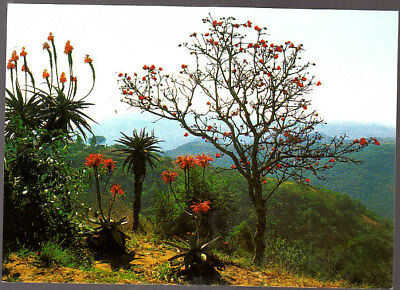 Unused Postcard, South Africa, Valley of a Thousand Hills, Natal