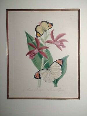Engraved Handcolored Plate, Epitome Of The Natural History Of China, Insects,...