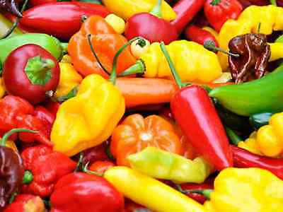 """Chilli Seeds """"Mixed"""" (40 Seeds) Excellent Variety"""