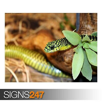 A GREEN SNAKE 2 (3685) Animal Poster - Picture Poster Print Art A0 A1 A2 A3 A4