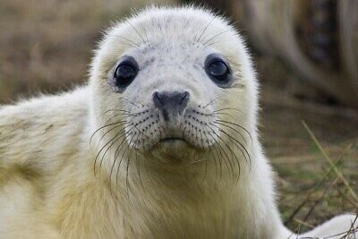 Grimsby Boat trips to DONNA NOOK Seal watching experience