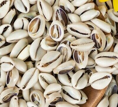 50 Cowrie Shells Sliced Small Cut Seashell for Jewelry Making Bracelets Anklets