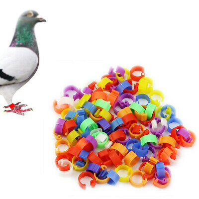 100 pcs 8 mm Clip On Leg Rings s for Bantam Chicks Quail  Parrot