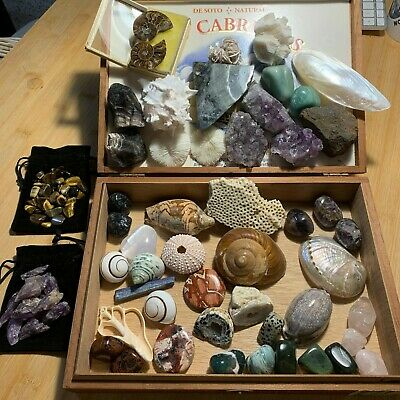 Crystals Minerals Fossils Seashells Collection 50+ pc, 4+ lbs.  Lot# 0420C