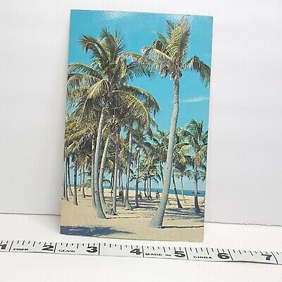 Vintage Postcard Florida Palm Trees 1960s