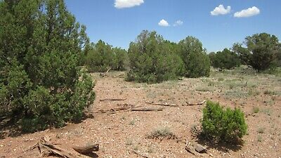Escape & Relax on this 1.18 Acre lot in Navajo County for only $2,800