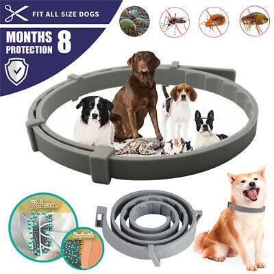 Dewel Pro Guard Flea and Tick Control Collar for Small Large Dog 8 Month Protect