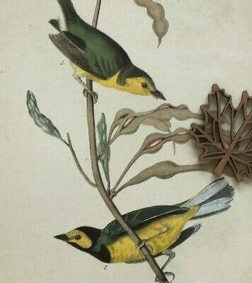 Audubon Art Print Bookplate Page COLORFUL BIRDS WARBLERS ** SEE VARIETY