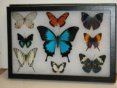 Real framed Butterfly collection #2