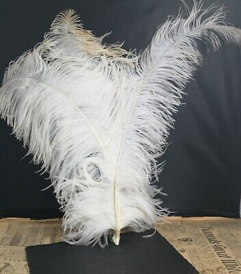 Antique Victorian ostrich feather plume, millinery