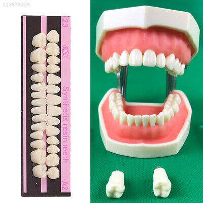 F582 Acrylic Resin 28 Teeth/Set Synthetic Polymer Makeup Beauty Resin Denture