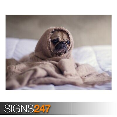 AE849 ADORABLE PUG DOG Photo Picture Poster Print Art A0 A1 A2 A3 A4