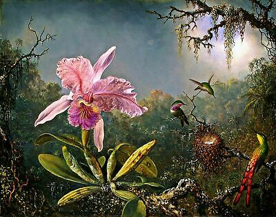 Canvas Prints Orchid & Brazilian Hummingbirds Framed & Ready to Hang Best Qualiy