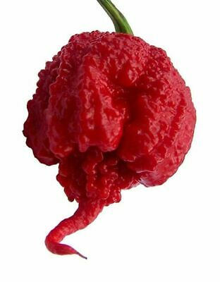 200PC Carolina Reaper Seed Red Hot Chilli Pepper Rare Viable Seeds Extreme Hot