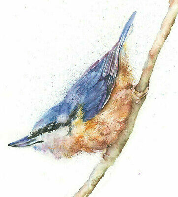 HELEN APRIL ROSE original NUTHATCH wildlife art watercolour painting 637