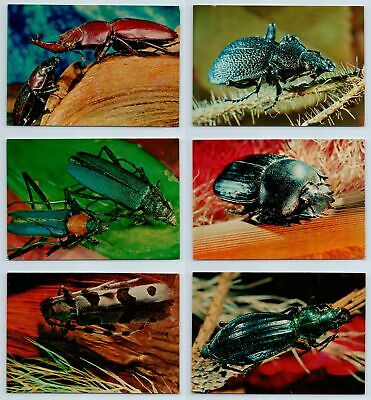 BEETLES BUGS insects Real Photo RARE SET 24 pcs Soviet Postcards in Folder