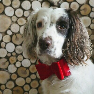 Rosewood Christmas Luxury Red Velvet Bow Tie Small And Large